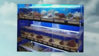 Aquarium Store - Video