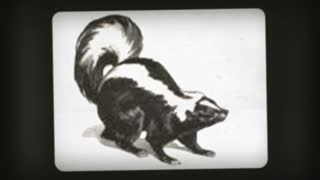 skunk odor eliminator - Video