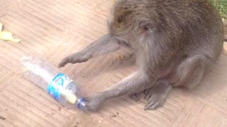 Monkey successfully removes banana from bottle - Video