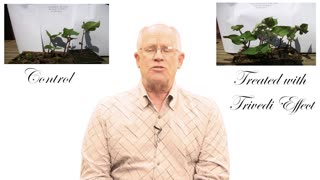 Healers Mastery Program - Effect Of Energy Retreats On The Seeds - Video