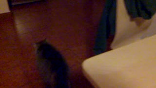 MY CAT AND THE PEN - Video