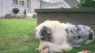 A dog smoking - Video