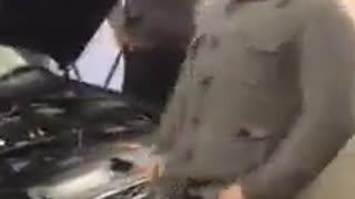 How to use a cheetah - Video