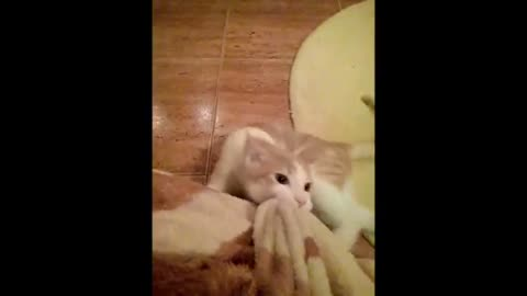 Furious Cat Really Wants His Blanket