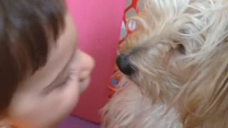 Meletwins Kissing dog - Video