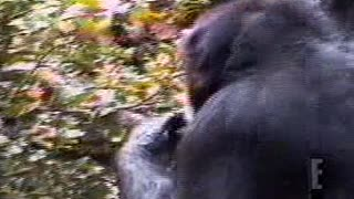 Monkey SUPER funny - Video