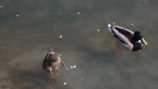 Ways to catch the fish. . hehe - Video