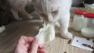 Vegetable-Loving Cat Munches on Cabbage - Video