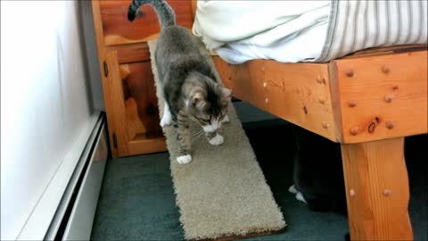 "Quirky the Blind Kitten - ""Gettin Outa Bed"""