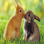 RABBITS_LOVE